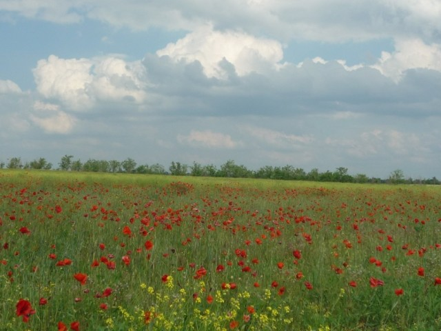 This image of poppy field reflects the idea of Wednesday sessions (seminars) to me: happen every week at the same time, last for an hour, but are so different from each other if you look closer. Taken by my friend Natasha (Summer 2010)